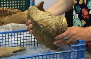 В Пермском крае обнаружено массовое захоронение древних животных