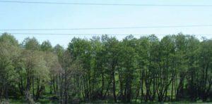В лесах Пермского края завершили обустройство минерализованных полос