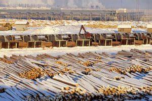 В Перми откроют вторую в России биржевую площадку для торговли лесом