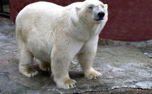В Перми объявили конкурс на строительство зоопарка