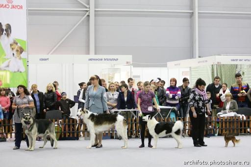 В столице Прикамья открылась международная выставка собак