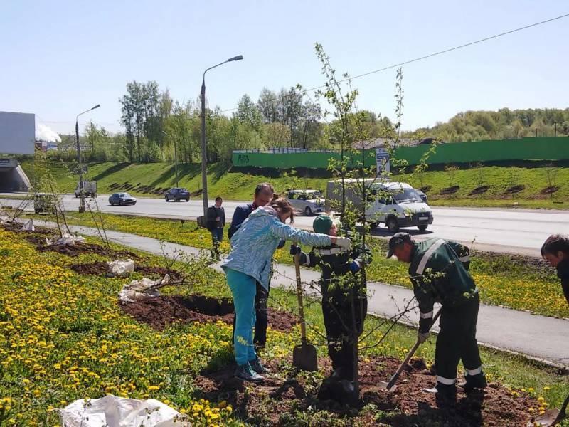 В прошлом году в Перми высадили 29 тысяч единиц зелёных насаждений