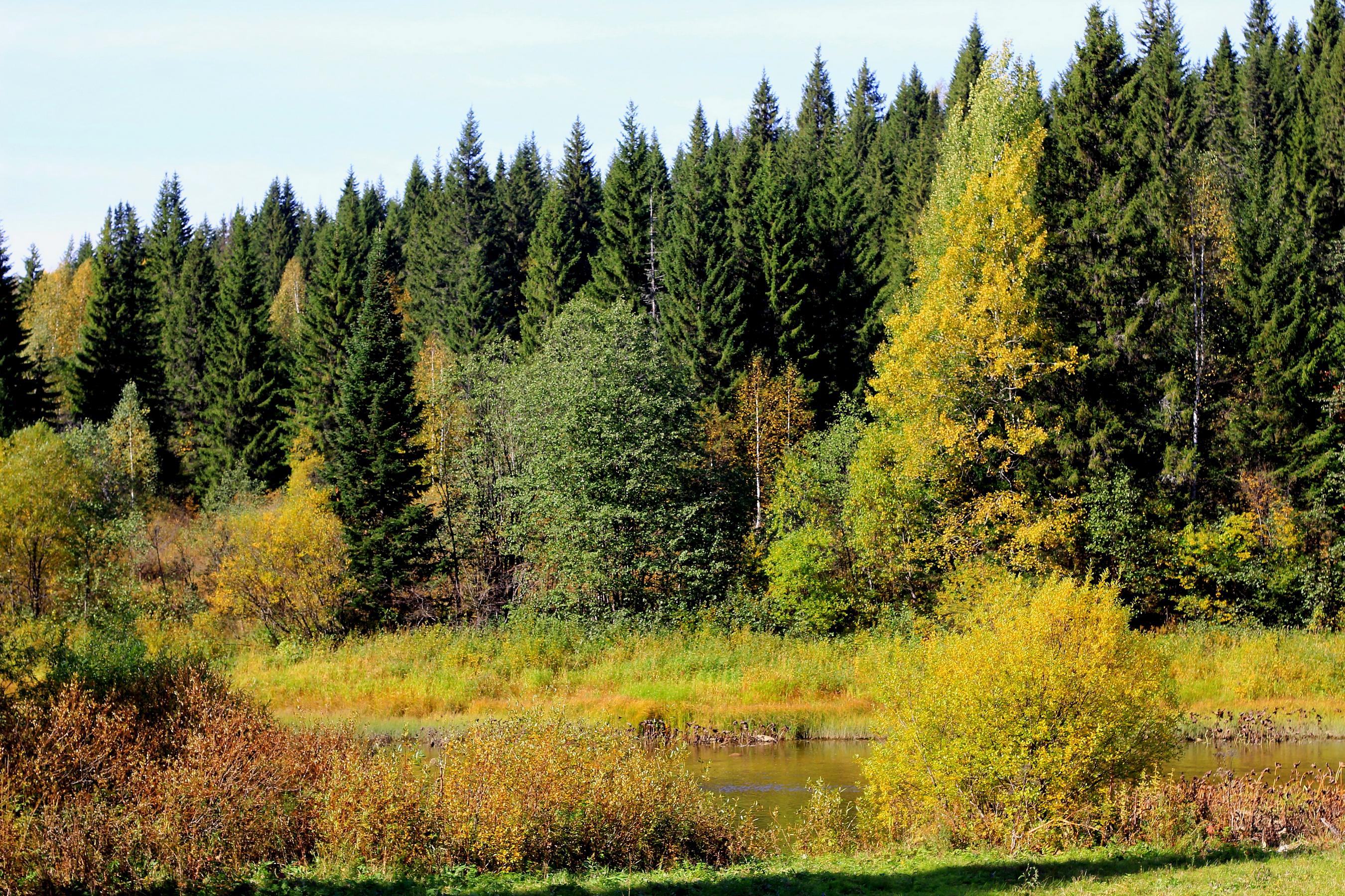 Использование лесов Пермского края ежегодно даёт доход более 800 миллионов рублей