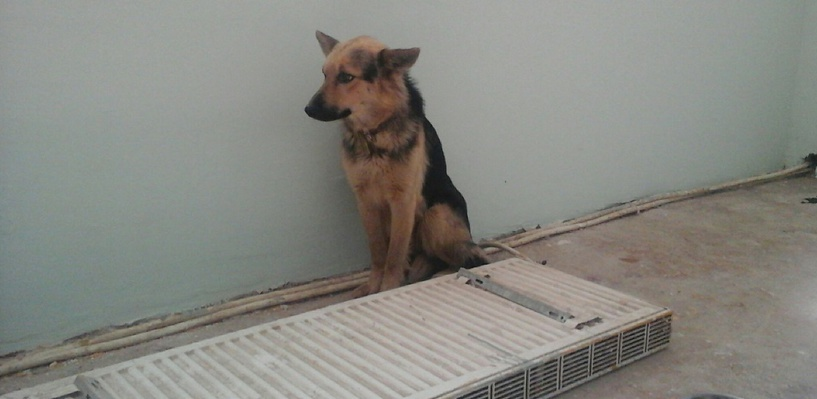 В Перми открылась «скорая помощь» для бездомных животных
