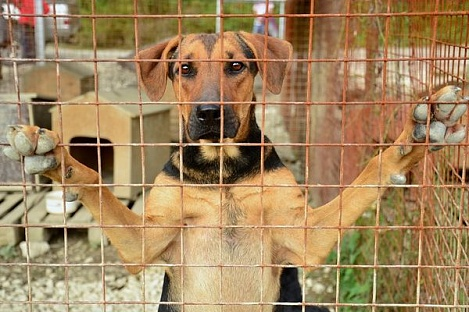 На пермскую журналистку, написавшую о приюте для животных, совершено нападение