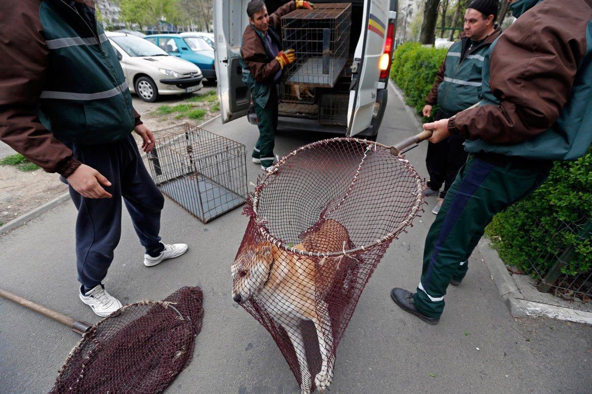 В Пермском крае увеличат финансирование на отлов бездомных животных