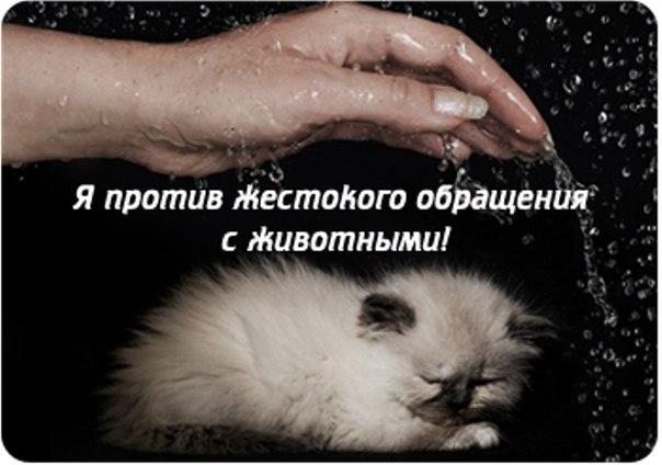 В Перми состоится митинг против жестокого обращения с животными