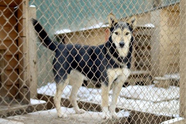 В пермском приюте для животных разгорается скандал