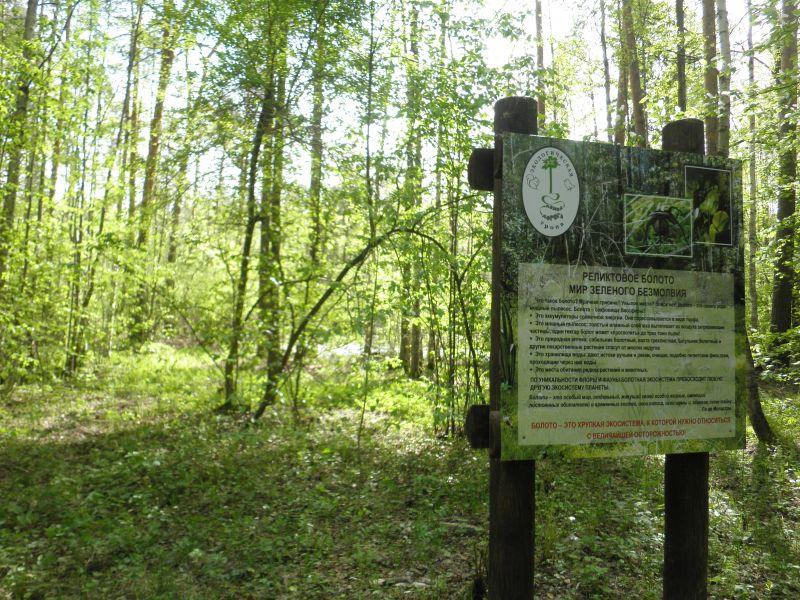 В пермских лесах проводят экскурсии
