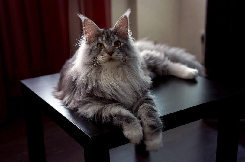 В Перми прошла международная выставка кошек