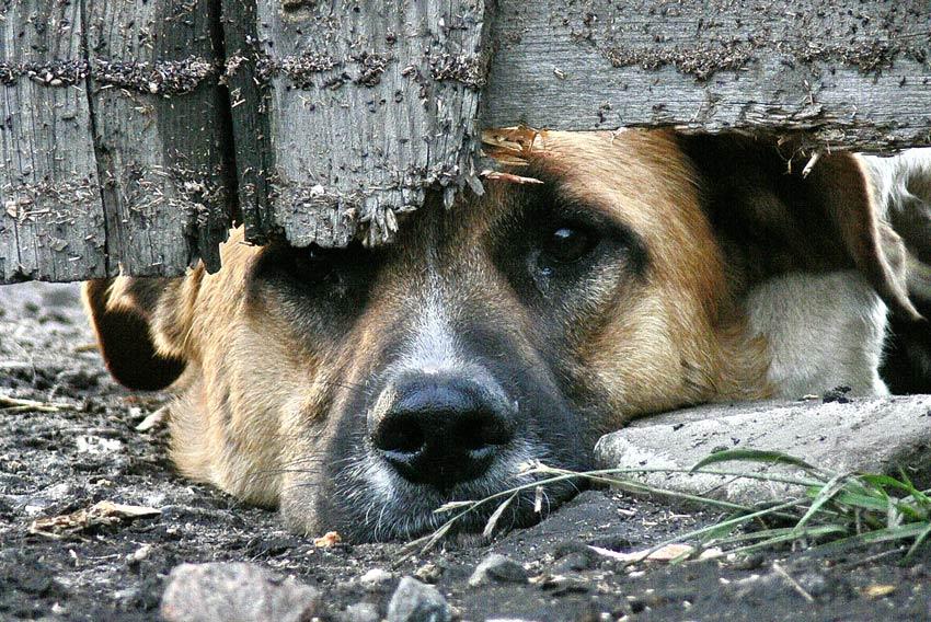 Издевательства над собаками в пермском муниципальном приюте подтвердились