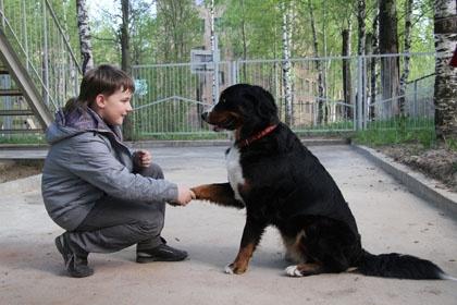 В Перми запущен проект с использованием собак-канистерапевтов