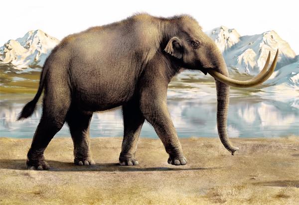 В Пермском крае продолжаются раскопки останков трогонтериевого слона