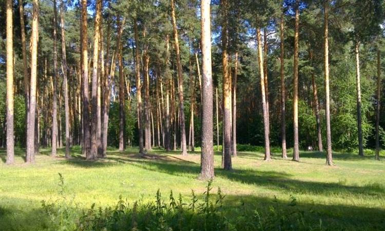 В Перми создадут три новые особо охраняемые природные территории