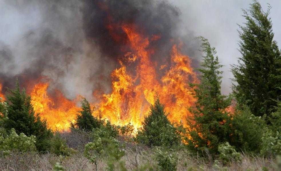 Новая система борьбы с лесными пожарами опробована в Прикамье