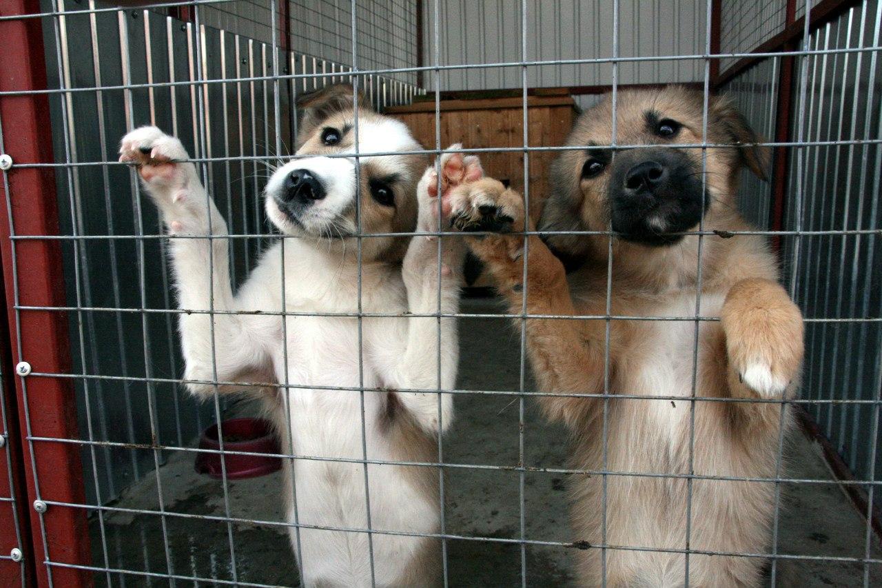 Новый приют для бездомных собак откроется в Перми