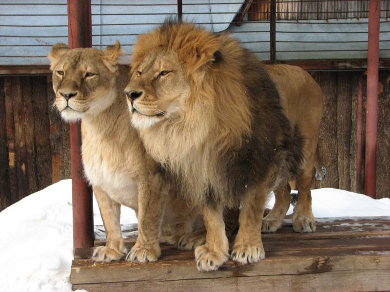Отставание в сроках строительства Пермского зоопарка сократилось