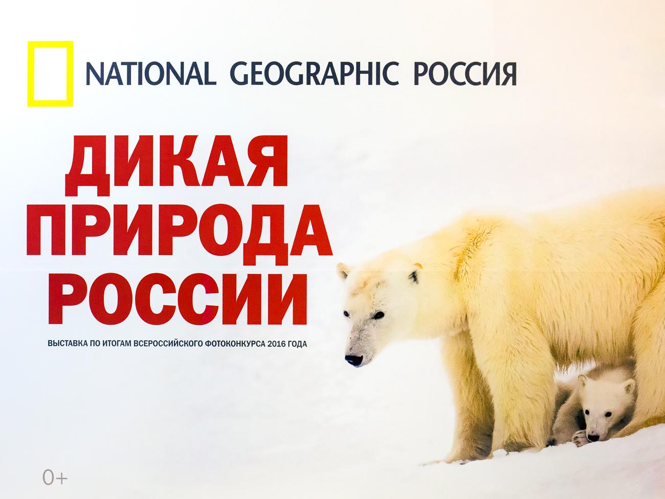 В Перми открывается выставка «Дикая природа России»