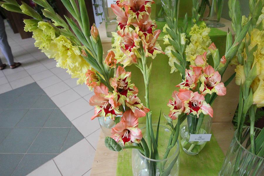 В пермском ботаническом саду вывели новые сорта гладиолусов