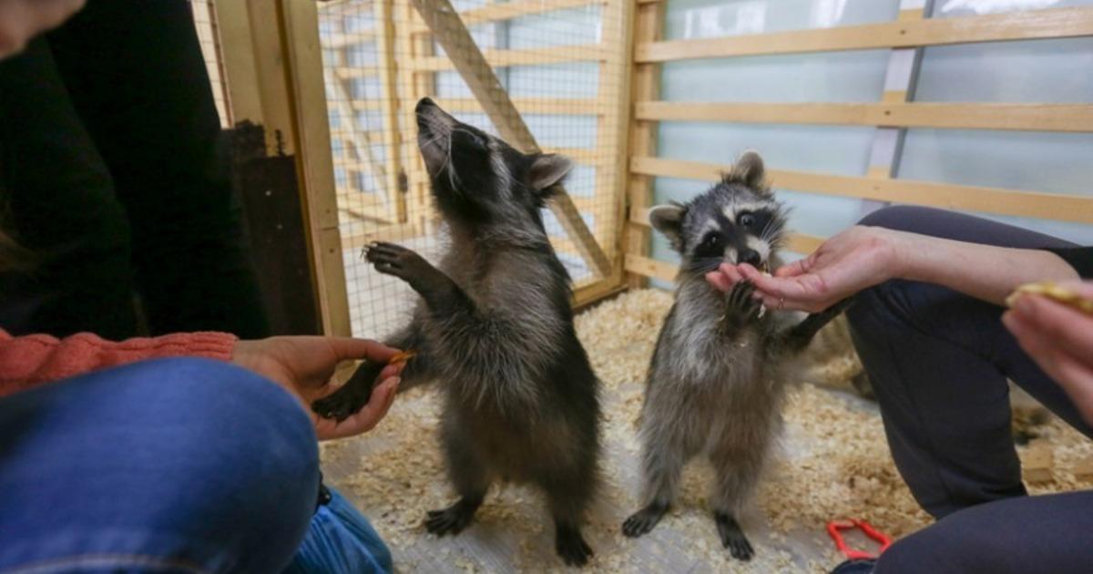 В Перми состоится акция, направленная против контактных зоопарков