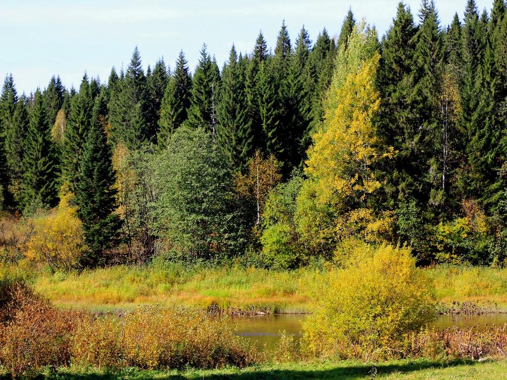 В пермских лесах начато обустройство мест отдыха