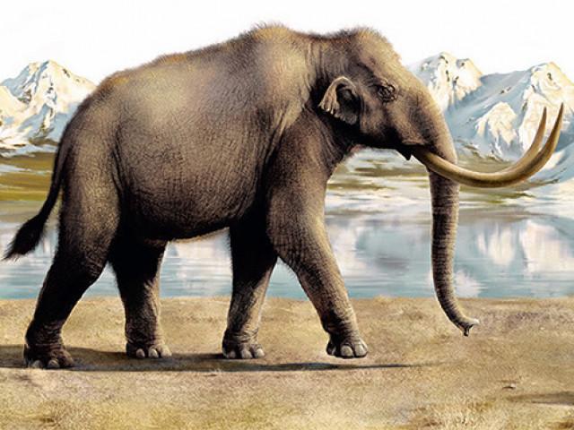 В Прикамье откопали кости трогонтериевого слона