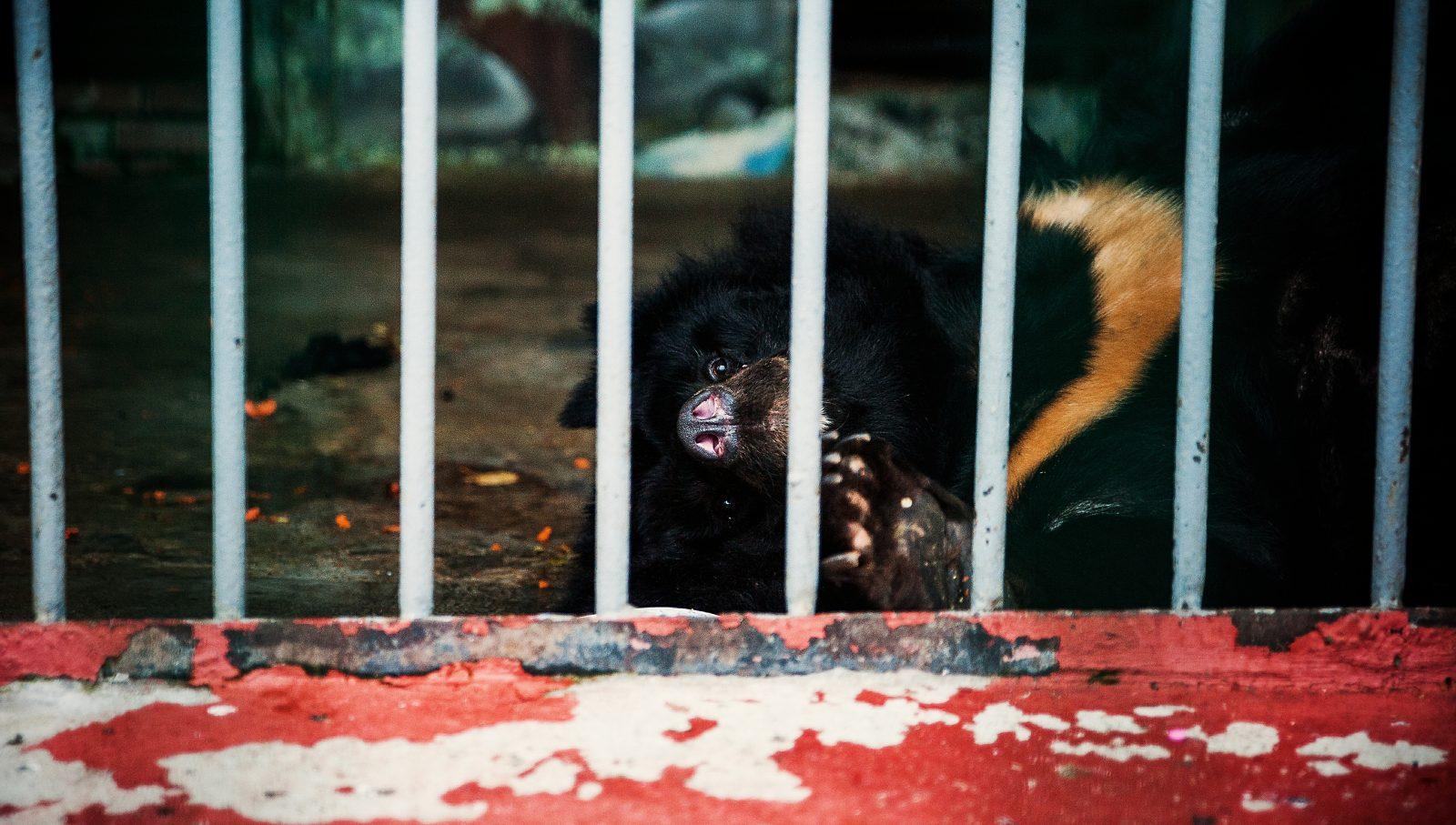 Пермский зоопарк переедет
