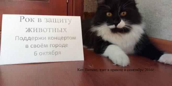 Рок выступит в защиту животных в Перми