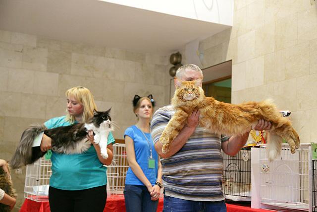 В Перми проходит международная выставка кошек