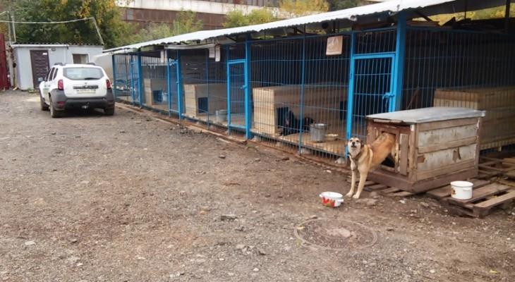 Муниципальный приют для животных появится в Перми через год