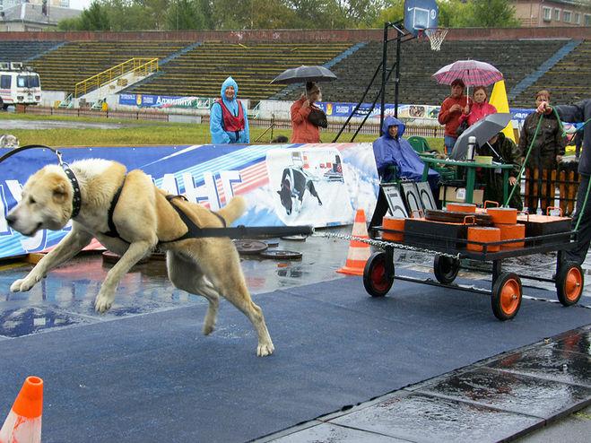 Необычный чемпионат пройдёт в Перми