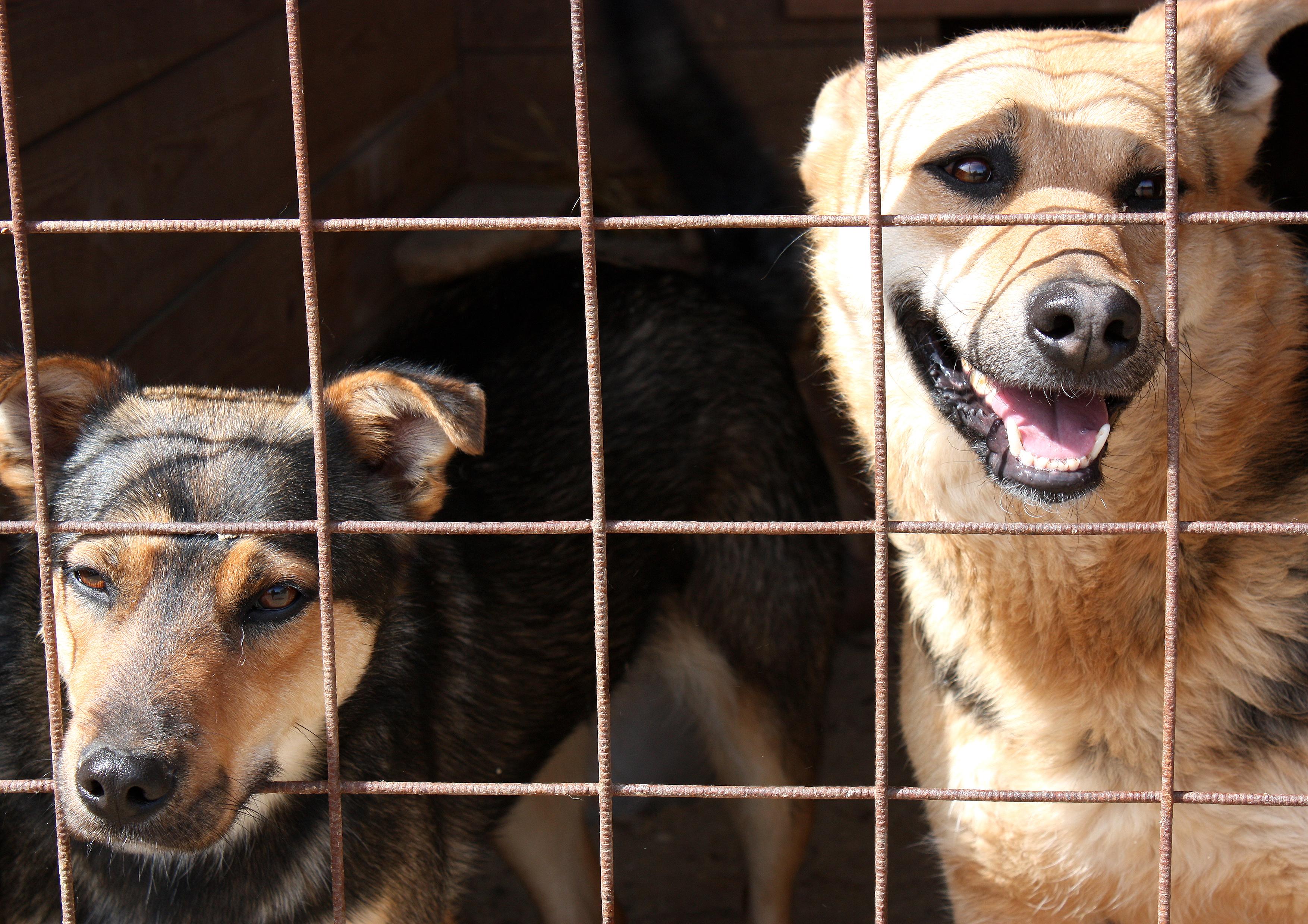 Собачий приют вызвал недовольство у пермяков