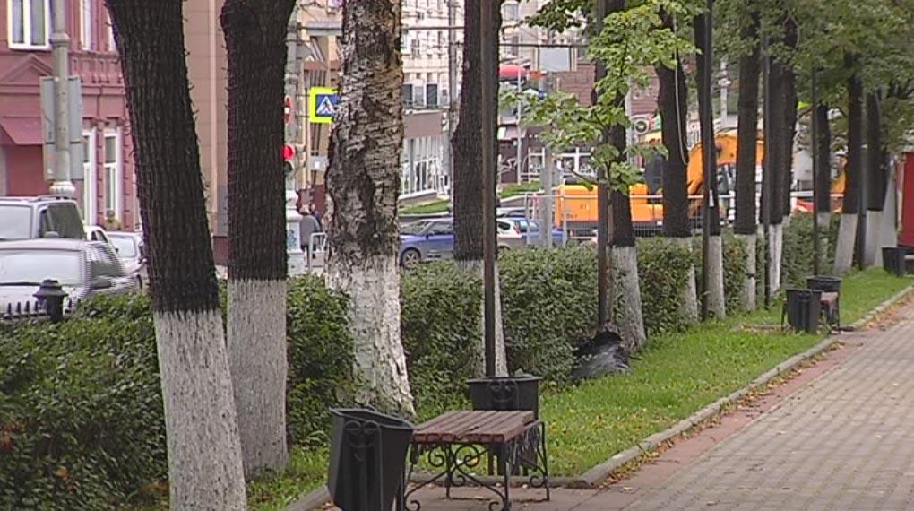 Пермяки высказываются против вырубки деревьев на Комсомольском проспекте