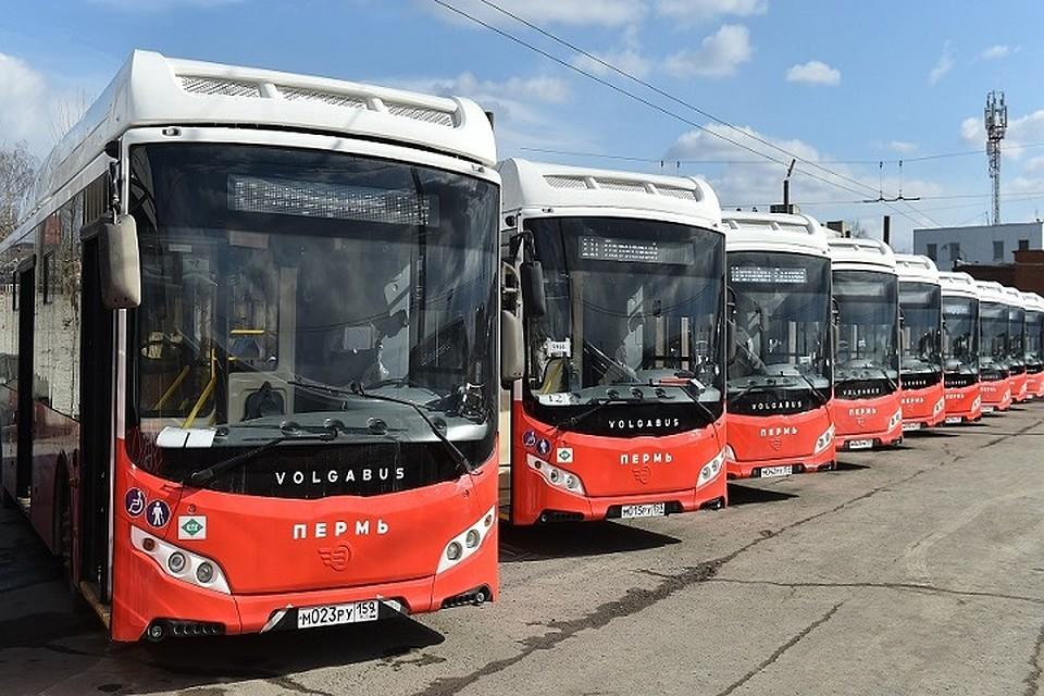 В Прикамье создают оператора пассажирских перевозок