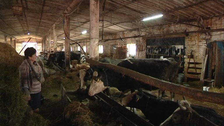 Пермские фермеры могут рассчитывать на господдержку