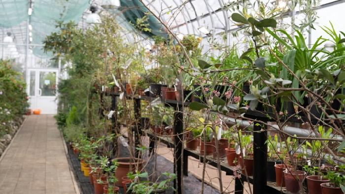 В пермском Ботаническом саду открыта субтропическая оранжерея