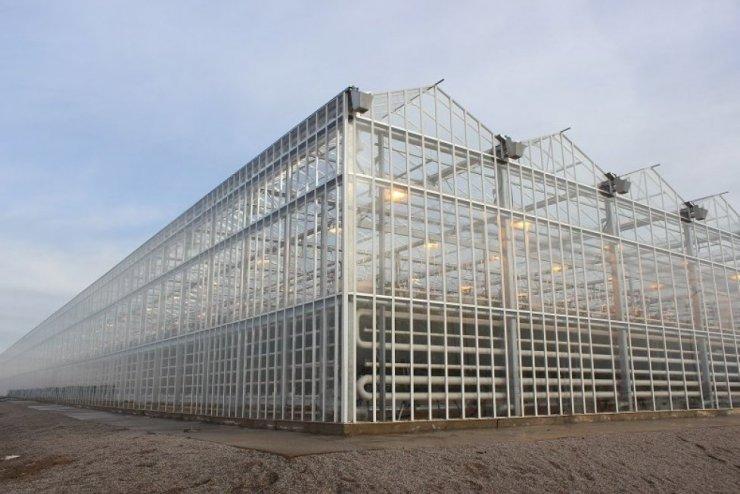 В Прикамье откроется масштабный тепличный комплекс