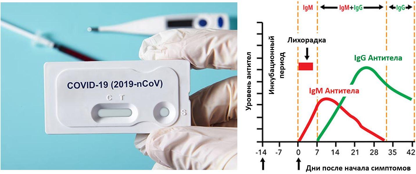 Около 15% прикамцев имеют антитела к COVID-19