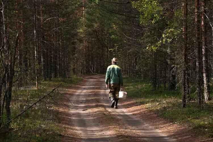 Прикамцам разрешили гулять в лесах