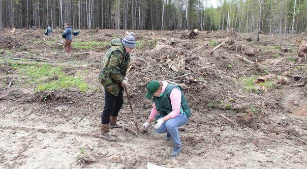 В Прикамье рассказали о проекте «Сохранение лесов»