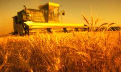 Пермские сельхозпредприятия заготовили необходимые корма